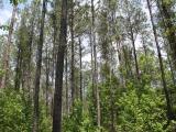 ea_5_Lee_County__NC__31_acres__TBD_Doyle_Cox_Rd_JP