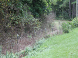 ea_8_Scotland_County__NC__37_acres__23801_Marston_