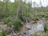 ea_Lee_County_NC_47_Acres__TBD_Lower_River_Road__C