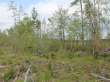 ea_Lee_County_NC_47_Acres__TBD_Lower_River_Road__I