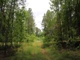 ea_Lee_County__NC__34_acres__TBD_Buckhorn_Road__En