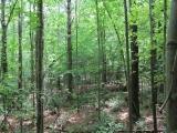 ea_Lee_County__NC__34_acres__TBD_Buckhorn_Road__In