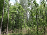 ea_Lee_County__NC__34_acres__TBD_Buckhorn_Road__Ti