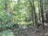 ea_Moore_County__12_acres__TBD_Red_Hill_Rd__Interi