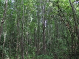ea_Moore_County__NC__10_55_Acres__TBD_Cranes_Creek