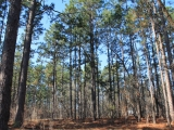 ea_Moore_County__NC__10_Acres__1653_Youngs_Road__T