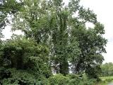 ea_Moore_County__NC__11_09_acres__TBD_Cranes_Creek