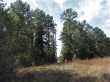 ea_Moore_County__NC__19_acres__TBD_Joel_Road__timb