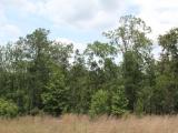 ea_Moore_County__NC__21_acres__TBD_Richmond_Road__