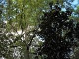 ea_Moore_County__NC__24_acres__TBD_Buggy_Drive__Ca