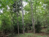 ea_Moore_County__NC__24_acres__TBD_Buggy_Drive__In
