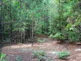 ea_Moore_County__NC__24_acres__TBD_Buggy_Drive__Ol