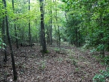 ea_Moore_County__NC__24_acres__TBD_Buggy_Drive__We