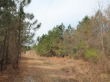ea_Moore_County__NC__27_Acres__Currie_Mill_Road__p