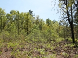 ea_Moore_County__NC__27_Acres__TBD_Roseland_Road__