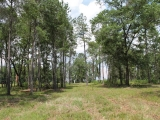 ea_Moore_County__NC__3_acres__TBD_S_Plank_Rd___11_