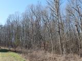 ea_Moore_County__NC__4_acres__TBD_Adams_Road__Stre
