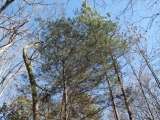 ea_Moore_County__NC__4_acres__TBD_Adams_Road__Timb