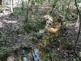 ea_Moore_County__NC__5_acres__TBD_Wilbert_Rd__Drai