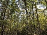 ea_Moore_County__NC__5_acres__TBD_Wilbert_Rd__Inte