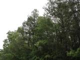 ea_Moore_County__NC__8_acres__TBD_Letlough_Rd_2_JP