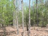 ea_Moore_County__NC__90_acres__TBD_Plank_Road__int