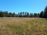 ea_Moore_County__NC__9_acres__NC_705__FTR