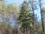 ea_Moore_County__NC__9_acres__TBD_Carolina_Road__M