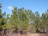 ea_trees4_JPG