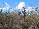 ea_trees5_JPG