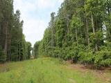 ea_Lee_County__NC__34_acres__TBD_Buckhorn_Road__Po