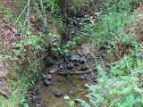 ea_Lee_County__NC__34_acres__TBD_Buckhorn_Road__St