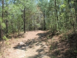 ea_Moore_County__NC__90_acres__TBD_Plank_Road__int