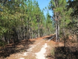 ea_Moore_County__NC__9_acres__TBD_Carolina_Road__A