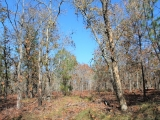 ea_Moore_County__NC__9_acres__TBD_Carolina_Road__B