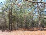 ea_Moore_County__NC__9_acres__TBD_Carolina_Road__P